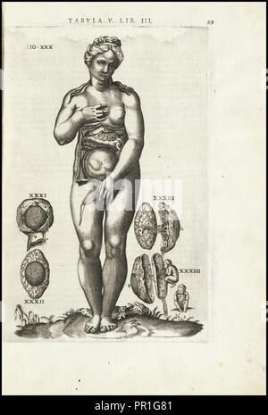 Female figure with reproductive organs, Vivae imagines partivm corporis hvmani aereis formis expressae, Vesalius, Andreas, 1514 - Stock Photo