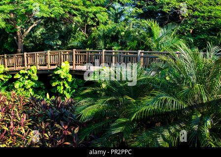 Path through Jungles - Stock Photo