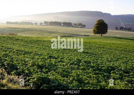 Morning Glory, Landschaft im Sonnenaufgang - Stock Photo