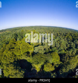 Aerial New Forest Drone Photo with Clear Skys - Stock Photo