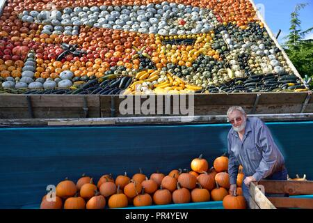 Slindon Village, West Sussex, UK. 29th September 2018. Annual Pumpkin Display Robin Upton stands in front of his pumpkin display, opening next week, which this year commemorates the hundredth anniversary of the RAF, the centenary of the Armistice and his familys 50 years of growing pumpkins. It runs from October to November (peaking around Halloween) and comprises of around 100 different varieties of pumpkin and squash.Credit Gary Blake/Alamy Live News - Stock Photo