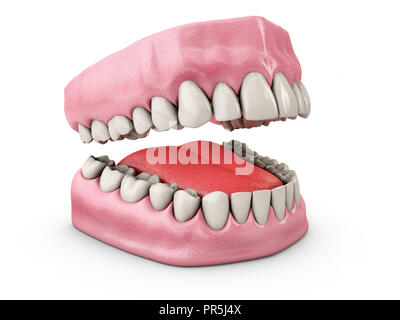 Jaw with teeth, Dentistry, medicine concept, Isolated on white background 3d illustration. - Stock Photo