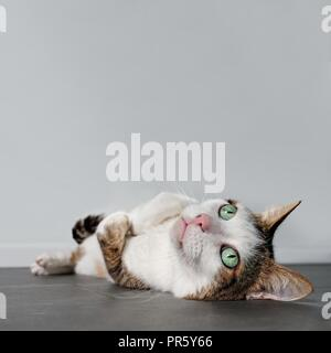 Satisfied tabby cat laying relaxed down on the ground and looking up. - Stock Photo