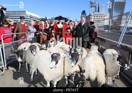 ALAN TITCHMARSH DRIVES SHEEP 2018 - Stock Photo