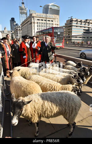 London, UK. 30th September 2018. TV personality Alan Titchmarsh drives the sheep across the bridge. The Worshipful Company of Woolmen Sheep Drive across London Bridge. Credit: Matthew Chattle/Alamy Live News - Stock Photo