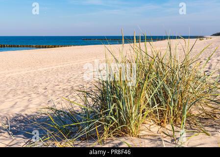 Grass, white sand dunes beach on the shore of the Baltic Sea. Poland. - Stock Photo