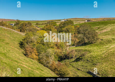 North Pennines AONB landscape, autumn colours and tints in Ettersgill, Upper Teesdale, County Durham, UK - Stock Photo