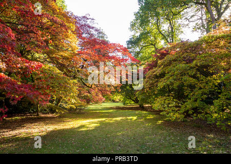 Westonbirt, Gloucestershire. 1st Oct 2018. UK Weather:Spectacular autumn colours are beginning to show at the Westonbirt Arboretum. In particular, the world famous acer glade glows in the sunlight as a rainbow of tones beam from every leaf on the Japanese Maples. Autumn appears to be starting early this year and it is predicited to be one of the best on record due to the long hot summer, visitors numbers to the national arboretum are expected to rise at this time of year. Credit: Wayne Farrell/Alamy Live News - Stock Photo