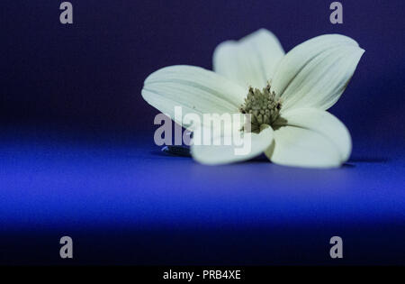 Yellow flower lonely lost in blue - Stock Photo