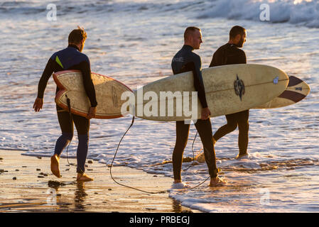 A group of three surfers carrying their surfboards and walking into the sea in the evening at Fistral in Newquay in Cornwall. - Stock Photo