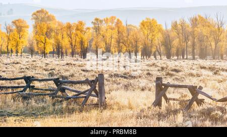 An autumn landscape scene in Jackson Hole, Wyoming, including an old style buck and rail wooden ranch fence and colorful aspen trees in early morning - Stock Photo