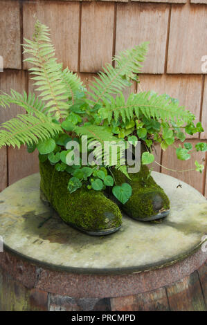 Ferns growing in a pair of old mossy boots - Stock Photo