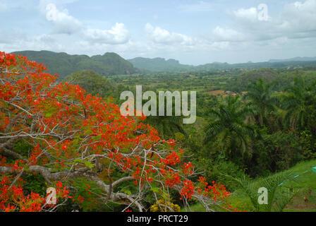 Viñales Valley, view across lush green landscape, Pinar del Rio Province, Cuba. - Stock Photo