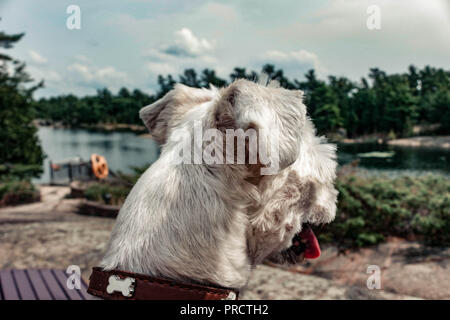 dog watching the summer vacation view on the beach. - Stock Photo