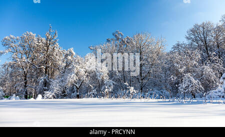 Winter forest snowy landscape. Beautiful snow covered nature plants, blue sky background, sunny weather - Stock Photo