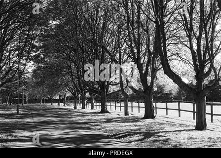 Tree-lined avenue near the entrance to the Lee Valley Riding School on Walthamstow Marshes, North London UK - Stock Photo