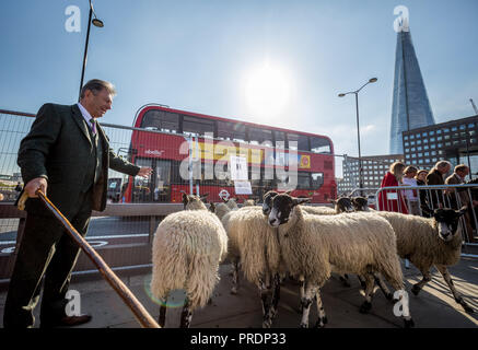 London, UK. 30th September, 2018. Annual Sheep Drive across London Bridge. Credit: Guy Corbishley/Alamy Live News - Stock Photo