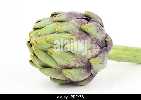 composition of fresh globe artichoke isolated on white background with copy space - Stock Photo