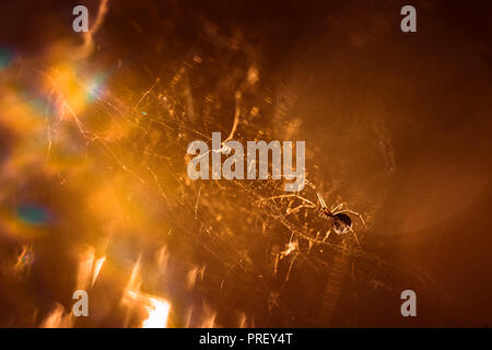 spider is sitting on a cobweb close-up. - Stock Photo