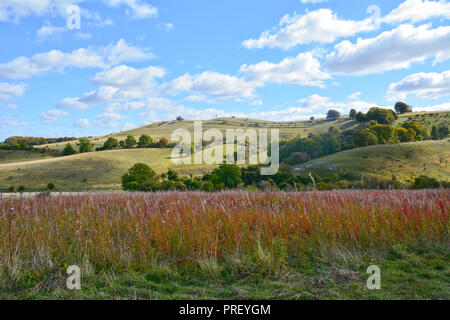 The beautiful Pegsdon Hills and Hoo Bit Nature Reserve a popular spot with walkers near the village of Pegsdon, Hertfordshire, England - Stock Photo