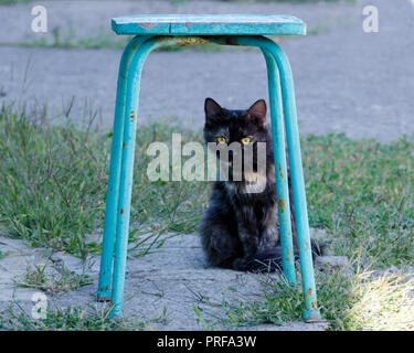 Street red black cat hides under a chair. Portrait of two-colored cat sitting on outdoor. - Stock Photo