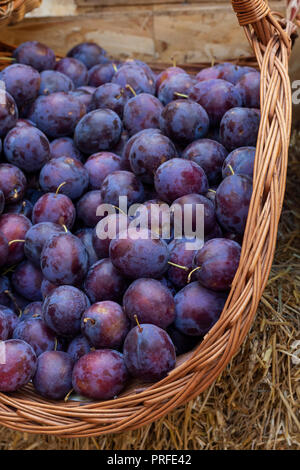 Ripe blue plums in the basket - Stock Photo