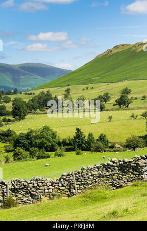Newlands valley Cumbria, looking north from its eastern slope above Littletown, towards Skelgill Bank. - Stock Photo