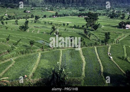 Rice paddies near Amed, Bali, Indonesia - Stock Photo