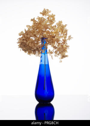 Close up of an elegant, beautiful blue glass vase with dried hydrangea flowers. Still life. - Stock Photo