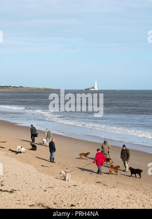 Group of people walking dogs on the beach in Whitley Bay, North Tyneside, England, UK - Stock Photo