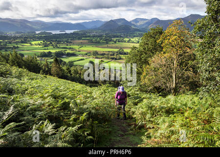 Walker on the Allerdale Ramble Path below Dodd in the Thornthwaite Forest (Lyzzick Wood) with Derwent Water in the Background, Lake District, UK. - Stock Photo