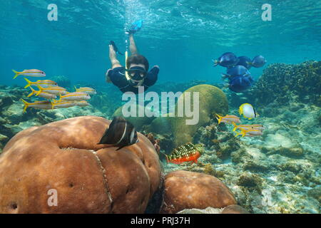 Man snorkeling underwater in a coral reef with colorful tropical fishes, Caribbean sea - Stock Photo