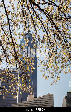 NEW YORK, NY - APRIL 22:  One World Trade Center building with blooming tree view from Greenwich street  on April 22, 2015 in New York City. - Stock Photo