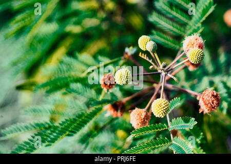 Plant with flowers of molecular shape on green background - Stock Photo