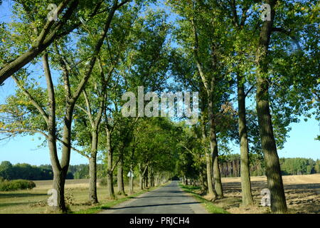 Country road with green trees along on sunlight with shadow. - Stock Photo