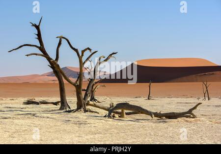 Dead camelthorn trees (Acacia erioloba) in Deadvlei, Namib Desert, Namib-Naukluft National Park, Namibia - Stock Photo