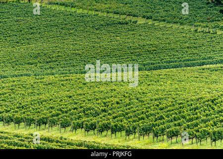 Viniculture, Vale dos Vinhedos, Rota da Uva e de Vinho, Grape and Wine Road, Bento Goncalves, Rio Grande do Sul, Brazil - Stock Photo