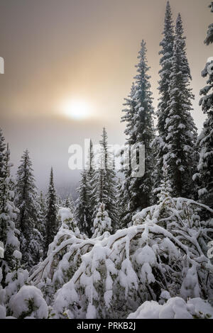 Snow covered trees near Moraine Lake in Banff National Park, Alberta, Canada. - Stock Photo