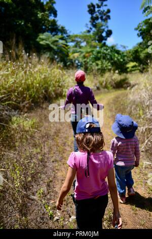A mother walking with her daughters through a forest, Misty Mountains wilderness tracks, Queensland, Australia - Stock Photo