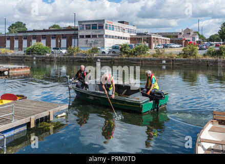Elderley men in a boat picking litter to clean water in Chichester Canal in Chichester, West Sussex, England, UK. - Stock Photo