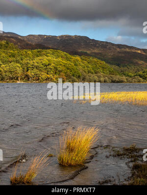 Stormy weather on the beach at Loch Achray  on an autumnal day whilst on The Three Lochs drive In the Trossachs National Park in Scottish Highlands - Stock Photo