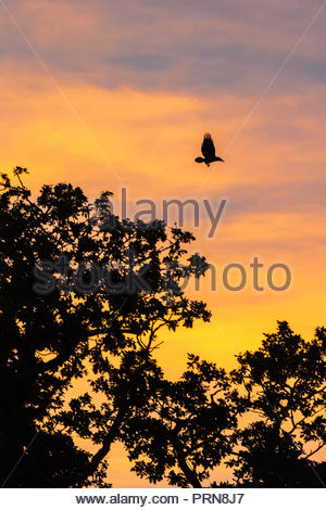 Avon Valley, Fordingbridge, New Forest, Hampshire, UK, 3rd October 2018. The warm early autumn weather brings a glowing sunset to the river valley and its surrounding countryside. A bird takes flight from a treetop against the orange sky. Credit: Paul Biggins/Alamy Live News - Stock Photo