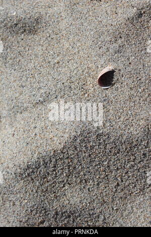 Simple photo showing the texture of colorful sand and a single shell. This backdrop was captured on the shoreline of Long Island Sound in Connecticut. - Stock Photo