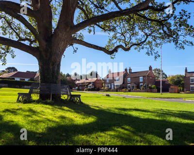 Bench around a tree on the Village Green at Aldborough near Boroughbridge North Yorkshire England - Stock Photo