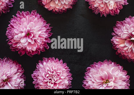 Spaced Pink Mums on Black Table with Space for Copy - Stock Photo