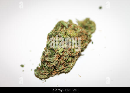 Dried Flower of Legal Cannabis on white - Stock Photo