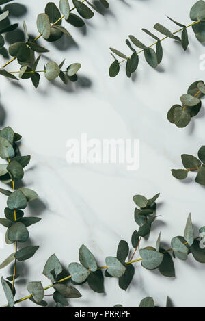 top view of eucalyptus leaves on white background - Stock Photo