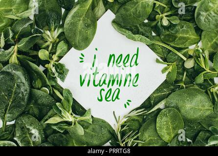 top view of white card with words I Need Vitamine Sea and beautiful wet green leaves - Stock Photo