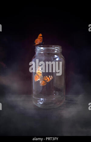 Butterfly in Jar - Stock Photo