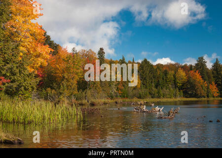 A shoreline explodes with vivid color on a bright autumn day. - Stock Photo
